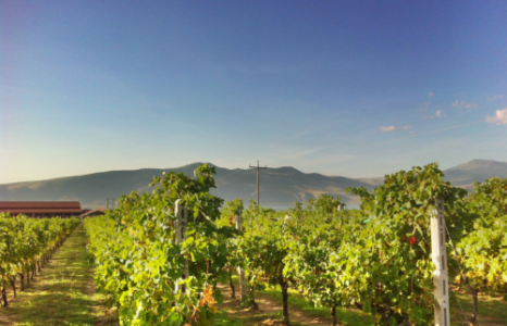 Classic wineries of Northern Greece