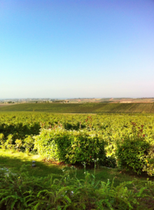 Gerovassiliou vineyards