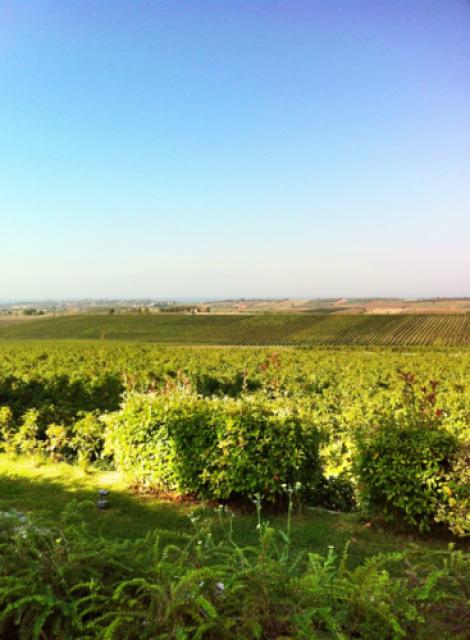 Gerovassiliou vineyards