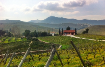 Vineyards of Greece